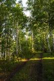 Een wegtrog een mooi groen bos Gouden licht die binnen door de bladeren sijpelen Stock Afbeeldingen