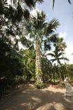 Een weide met een coconatpalm en een gras en bomen en stenen en standbeeld in de tropische botanische tuin van Nong Nooch dichtbi Royalty-vrije Stock Afbeeldingen