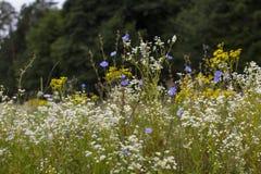 Een weidehoogtepunt van bloemen, naast een bos Stock Foto's