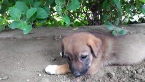 Een weinig bastaard puppy die in een boomgaard leggen stock videobeelden