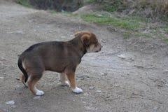 Een weinig eenzaam puppy in Roupite Stock Foto's