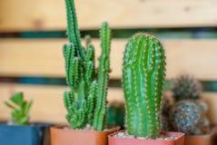 Een weinig leuke groene cactus in rode plastic pottentribunes uit van Th stock foto