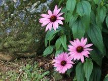 Een weinig Roze bloemen stock afbeeldingen