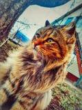 Een weinig tigerlike zit de kat in de wind in de tuin De kat let op Een enkel mooie kat stock foto
