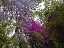 Een welk mooi ding een bloem is! stock foto's