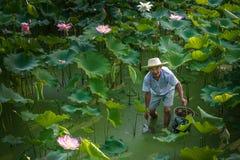 Een Werkende Mens in Lotus Field Royalty-vrije Stock Foto