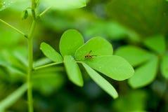 Een Wesp die op een blad wandelen stock afbeeldingen