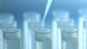 Een wetenschapper met een pipet analyseert een gekleurde vloeistof om DNA en de molecules in de reageerbuizen te halen stock video