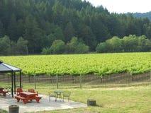 Een wijngaard Stock Afbeeldingen