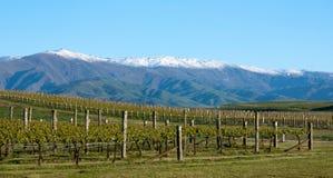 In een wijngaard die bergen dichtbij Clyde en Alexandra in het Zuideneiland bekijken in Nieuw Zeeland stock afbeelding