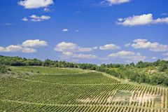 Een wijngaard in Macedonië stock foto's
