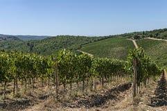 Een wijngaard in Toscanië, Italië Royalty-vrije Stock Afbeeldingen