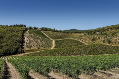 Een wijngaard in Toscanië, Italië Stock Foto's