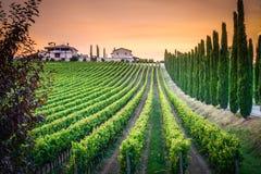 Een wijnmakerij in Umbrië, Italië stock foto's