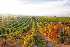 Een wijnwijngaard in Frankrijk. royalty-vrije stock afbeelding