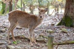 Een wild hert in het park royalty-vrije stock foto