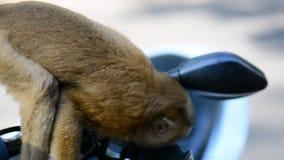 Een wilde aap eet een gevallen boom met een banaan in Thailand stock video
