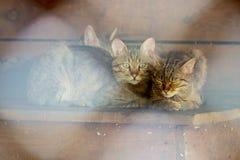 Een wilde boskat zit in een vogelhuis met zijn katjes stock foto's