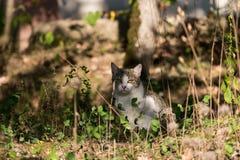 Een wilde bruine en witte kat zit stock foto