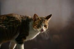 Een wilde kat royalty-vrije stock fotografie