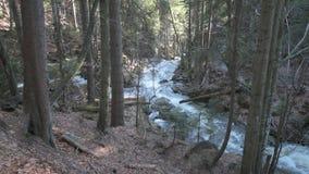 Een wilde kreek in Beiers bos stock footage