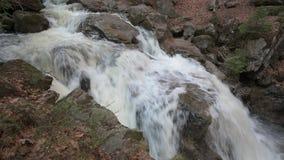Een wilde kreek in het Beierse bos stock video
