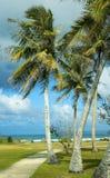 Een Winderige Tropische Dag Royalty-vrije Stock Afbeelding