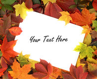 Een wit blad van document op een de herfstkader Royalty-vrije Stock Afbeeldingen