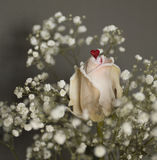 Een wit nam met rood hart toe Stock Fotografie