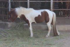 Een wit paard in de dierentuin Stock Fotografie