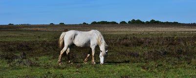 Een wit paard en de blauwe hemel Royalty-vrije Stock Afbeeldingen