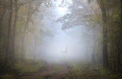 Een wit paard in het bos Stock Afbeeldingen
