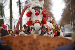 Een wit paard met rode uitrusting, Suzdal, Rusland Royalty-vrije Stock Fotografie