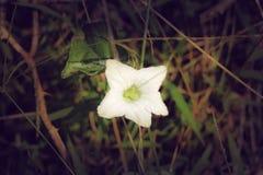 Een witte bloem zoals als het kijkt ons Stock Afbeelding