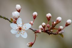 Een witte bloesem in de lente royalty-vrije stock foto