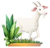 Een witte geit stock illustratie