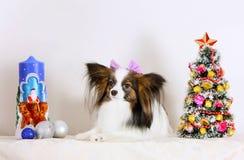 Een witte hond met een boog ligt met Kerstmisdecoratie Stock Foto