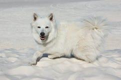 Een witte hond in wit zand Royalty-vrije Stock Afbeelding