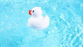 Een witte rubbereend zwemt gemakkelijk af en drijft stock videobeelden