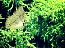 Een witte vlinder in een blad Royalty-vrije Stock Afbeeldingen