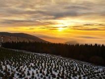 Een wolkeninversie vult de bodem van vallei tussen heuvels. De donkere pieken van bomen maken contrast met gele en oranje wolken o Stock Afbeeldingen