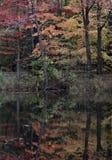 Een wonderbaarlijke & schitterende herfstbezinning in Cleveland Metroparks - Ohio - de V.S. Royalty-vrije Stock Afbeeldingen