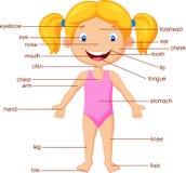 Een woordenschatdeel van lichaam Stock Afbeeldingen