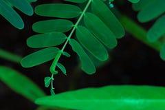 Een worm knaagt aan op boomblad stock afbeelding