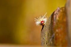 Een worm op hout Stock Foto