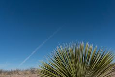 Een Yucca en de zuidwestelijke duidelijke blauwe hemel stock fotografie