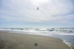 Een zeemeeuw die boven het zand vliegen Stock Afbeelding