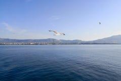 een zeemeeuw die over het Adriatische overzees bij zonsondergang vliegen royalty-vrije stock foto