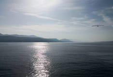 een zeemeeuw die over het Adriatische overzees bij zonsondergang vliegen stock fotografie