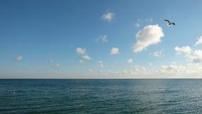 Een zeemeeuw die over een kalme overzees, op de achtergrond van een blauwe hemel met wolken opzet royalty-vrije stock foto's